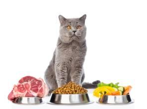 Качественный корм для кошки – гарантия здоровья и красоты питомца.