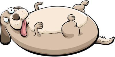 Роль производителей кормов в борьбе с ожирением домашних животных.