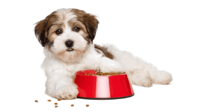 Выбираем корм собаке, 10 практических советов