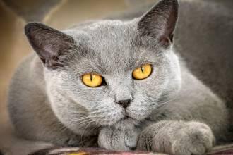 Какие корма для кошек лучшие?