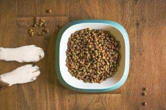 Сухой корм для собак Активный образ жизни.