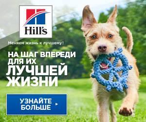 Сухие корма Hills для собак.
