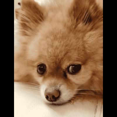 9 интересных фактов о собаках