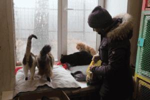 Приют «Вита» - ЯРОО ПБЖ «Шанс на жизнь»  г. Ярославль