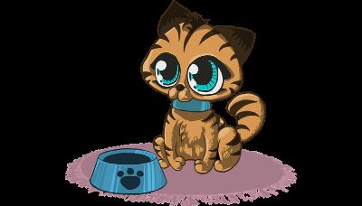 Каким кормом кормить кошку и собаку: виды и классы кормов?