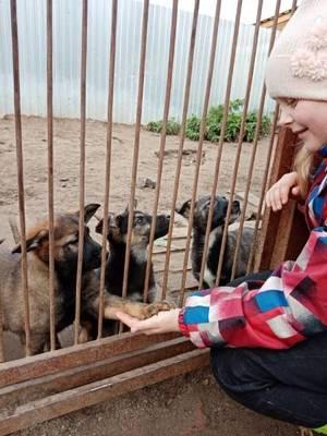 Хорошие мальчишки Артем, Богдан, Санек – «Мы просто пришли помочь собачкам».