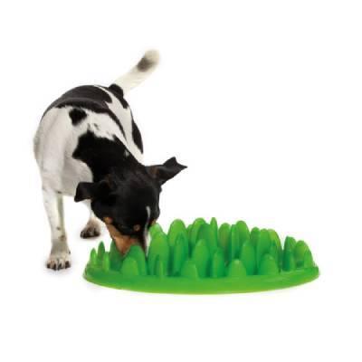 Как отучить собаку быстро есть: простой способ с помощью недорогого средства.