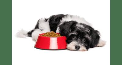 Полезный корм для собаки – отличное здоровье любимца