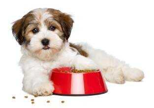 Сухой корм для собак мелких пород. Добрые советы от интернет магазина ZooKid.ru в Ярославле.